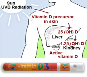 Vitamin D3 and Cancer